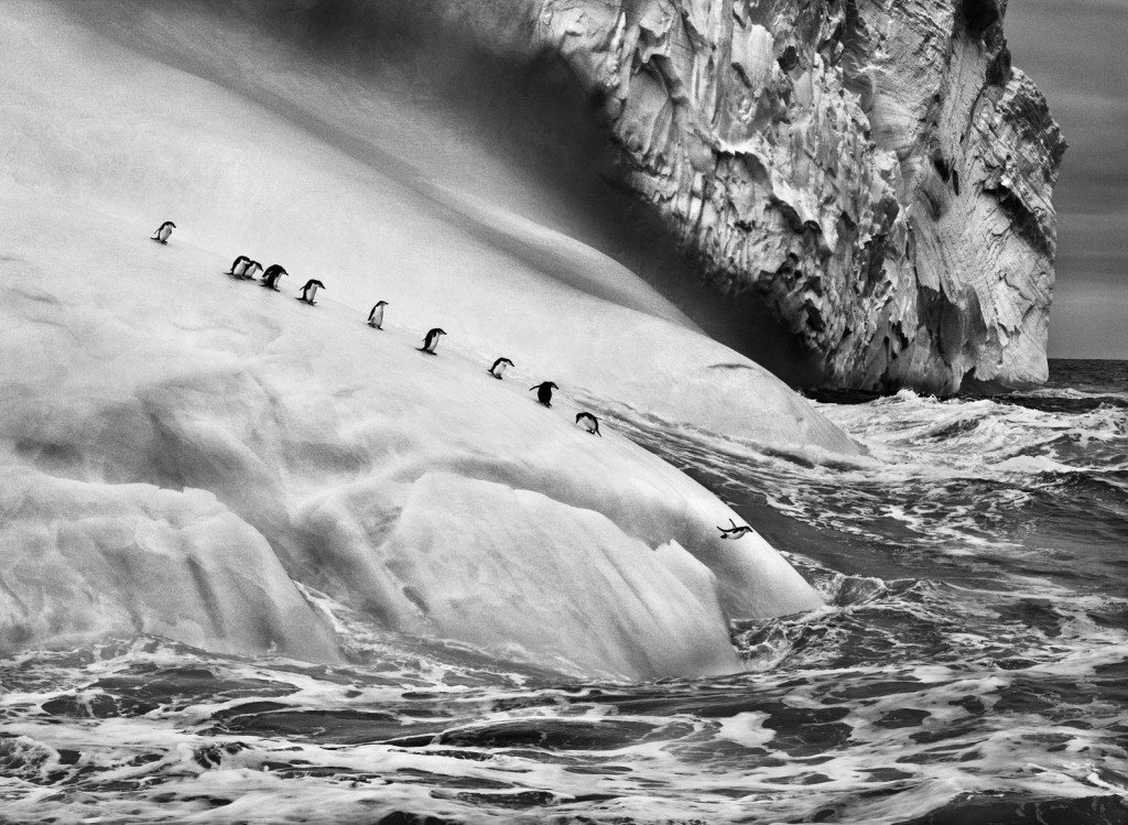 Isole South Sandwich, 2009 (© Sebastião Salgado/Amazonas Images)
